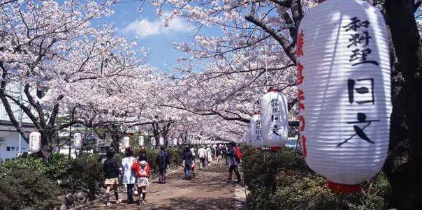 primavera em tokyo